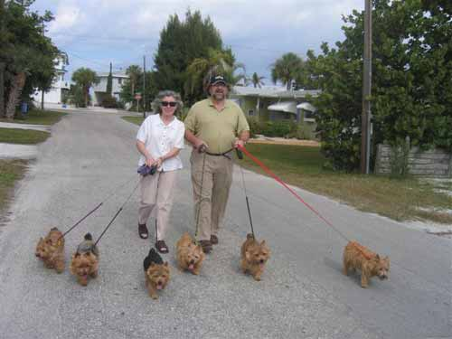 Norwich terriers pic