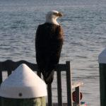 Waterfront perch