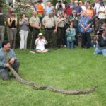 Islander takes in Everglades python hunt