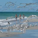 Sons and shorebirds