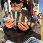 Sheepshead season in early stages, savy anglers hook up