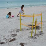 Sea turtle season produces all-time high nest numbers, hatchling disorientations troublesome