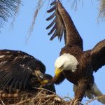 Week 3 winner, Eagle's landing