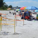 Sea turtle nests fare well in face of Emily's onslaught