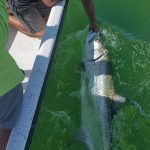 Fish more accommodating by morning, easier on anglers