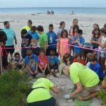 Some sea turtle nests on Anna Maria Island outlive Irma