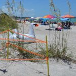Turtle watch reviews record 2017 nesting data, trends