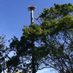 Nesting bird platform installed near Holmes Beach tennis courts
