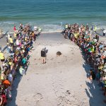 'Bortie' nests on Anna Maria Island, aids in research