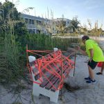 Beach benches frustrate turtle watchers