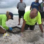 Holy sea turtle! Hatchlings emerge by the hundreds