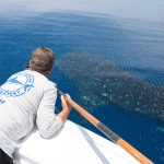 Local boaters have close encounters of the giant kind