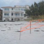 Turtle watch breaks record for nests, lighting concerns remain