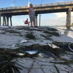 Toxic red tide arrives to AMI beaches, bays