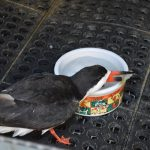 Wildlife rehab prepares to treat birds poisoned by red tide