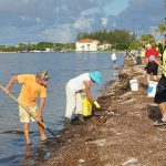 County, volunteers clear dead sea life from Palma Sola beaches