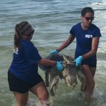Dolphin, sea turtles, manatees perish from red tide