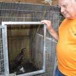 Wildlife rehab gets reprieve in lull after red tide influx