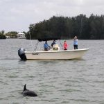 World's longest dolphin study continues in AMI's backyard