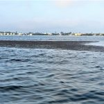 Brown algae interrupts environmental respite