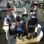 FWC, Mote rescue ailing juvenile manatee found in Holmes Beach basin