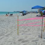 Early sea turtle nesting 'spotty' on Anna Maria Island