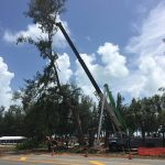 Six trees removed from Coquina Beach