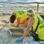 Hatchling sea turtles 
