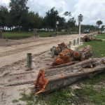 Trees downed at Coquina despite protest