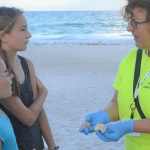 Sea turtle nesting slows, hatchlings surge to the Gulf