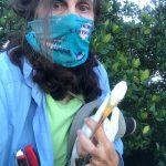 Rescuer blames 'something toxic' for rash of dead birds