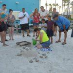 Dorian prompts turtle watch storm preparations