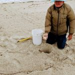New 'safer' practices launch with 2020 sea turtle season