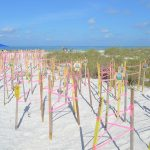 Nesting activity slows, hatchlings anticipated