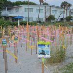 Sea turtle hatches escalate, lighting cause for concern
